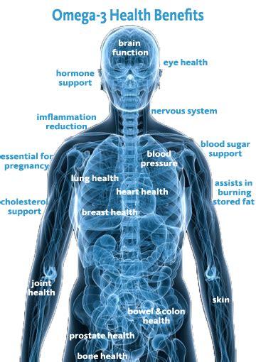 increase omega  stay healthy  samantha