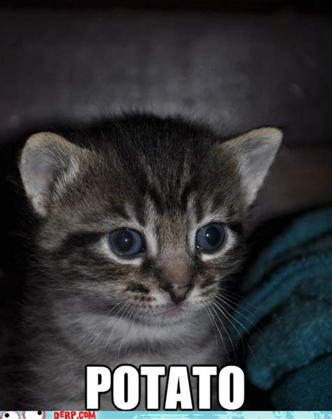 Cat Meme Faces - hurr durr derp face derp cat can count funny for the everyday man pinterest cats