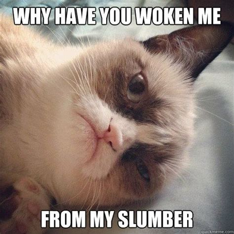 1000+ images about Grumpy Cat on Pinterest | You disgust ...