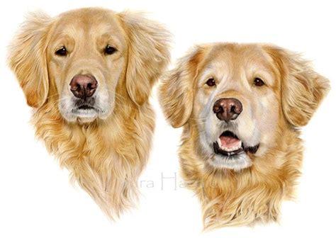 10 Best Images About Golden Retriever Art On Pinterest