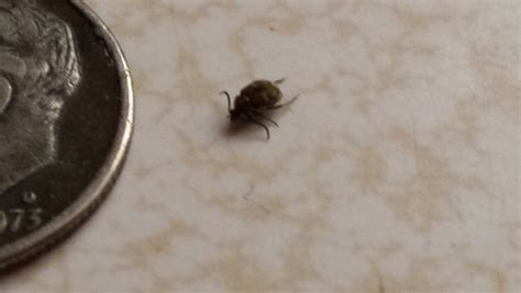 Small Bugs In Kitchen Sink, Tiny Black Bugs In Kitchen