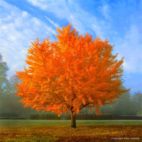 trees with fall foliage factory direct remodeling of atlanta 10 best trees for brilliant fall color opinion