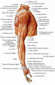 Anatomy, Muscle and Arm anatomy on Pinterest