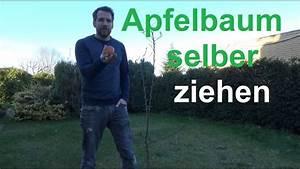 Aprikosenbaum Selber Ziehen : apfelbaum selber ziehen apfel aus samen vermehren apfelkern zum keimen bringen youtube ~ A.2002-acura-tl-radio.info Haus und Dekorationen