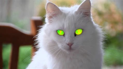 cat eyes most evil