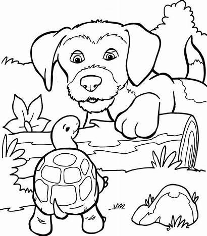 Kleurplaat Kleurplaten Hond Honden Dieren Schildpad Puppies