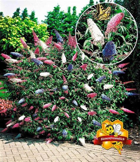 sommer flieder papillion tricolor kustarniki