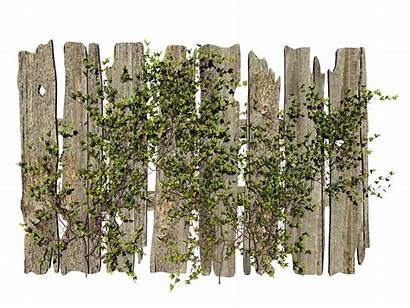 Plant Fence Ivy Misc Clip