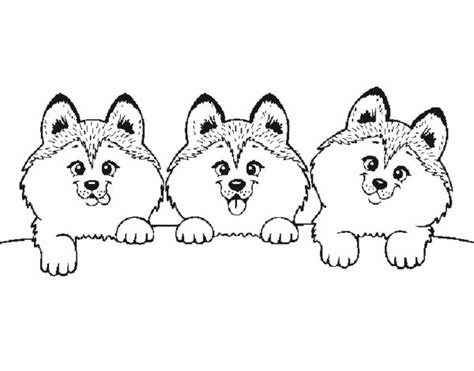 Border Terrier Coloring Pages Coloring Pages