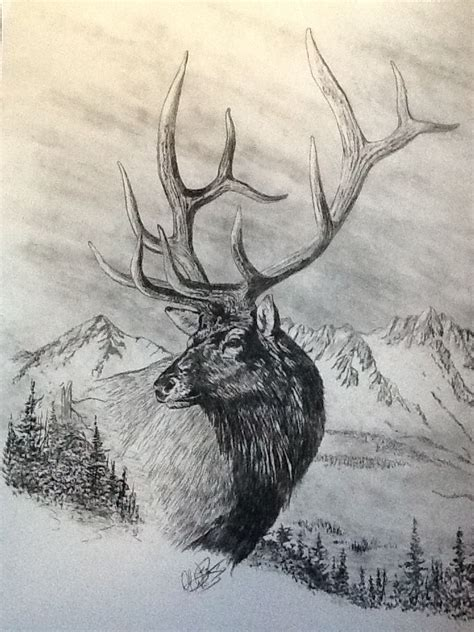 elk charcoal sketch   pencil drawings  animals