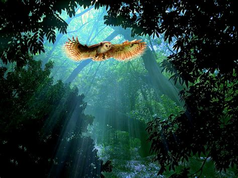 646 Owl Hd Wallpapers  Backgrounds  Wallpaper Abyss  Page 3