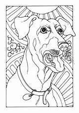 Bark Coloring Template sketch template