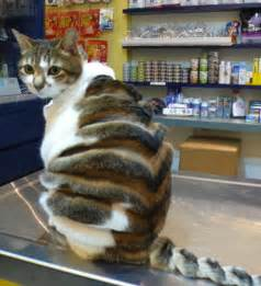 cat haircut the big cats animal haircuts craze sees pets