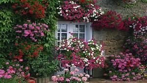 Cómo tener un jardín con flores durante todo el año ...