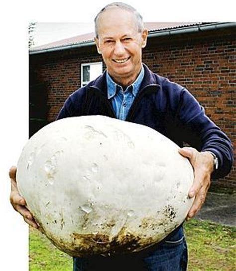 elf kilo riesen pilz  jaderberg entdeckt