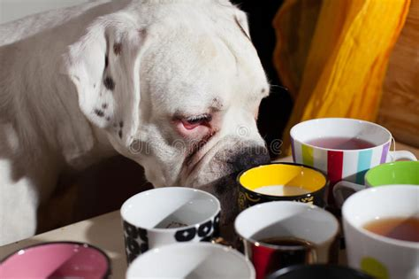 Coffee is something that is easily accessible, and that means that it may also be within easy reach for a curious canine or other family pet. Hello Monday Concept With Coffee Cups Stock Photo - Image ...