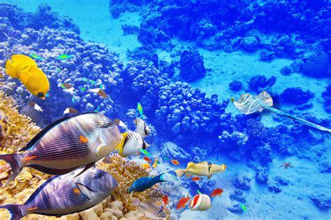 Animated Reef Wallpaper - coral reef wallpaper hd hd wallpapers