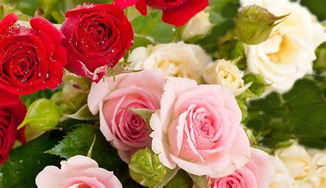 cuisine des sentiments encyclopédie fleurs le mag de flora le mag de flora