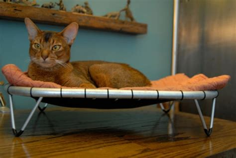 cat hammock bed comfortable hammock beds for cats digsdigs