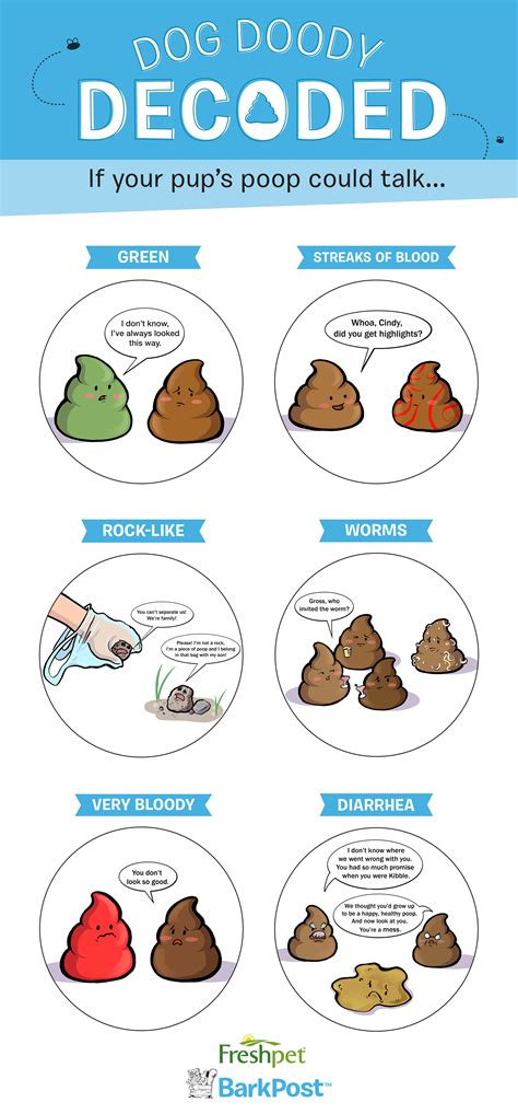 What Does The Color Of Your Dogs Poop Mean Barkpost