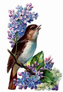 Vintage, Image, -, Bird, With, Lilacs
