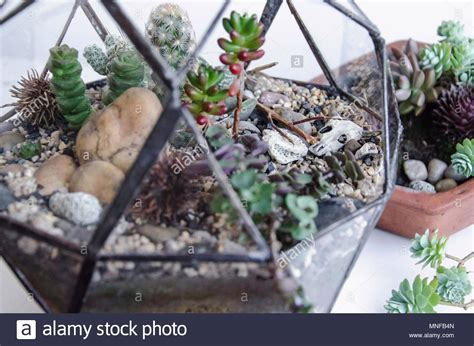 Terrarium Plant Stock Photos