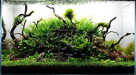Award Winning Aquascapes by The Pet Issue A Fish Tank Worth A Thousand Words Hiep