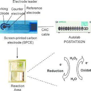 schematic diagram   synthesis  graphenezinc oxide nanocomposite  scientific