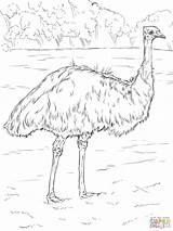 Emu Coloring Realistic Printable Drawing Animals Animal Bird Supercoloring Birds Colouring Australian Australia Dot Super Adult Cartoon Ausmalbilder Paper Parakeet sketch template