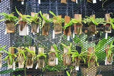 kleine orchideen haengen net bauernhof stockfoto