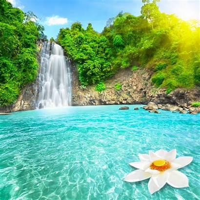 Desktop Fall Flowers Wallpapers Flower Nature Waterfall