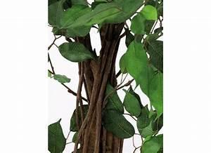 Ficus Benjamini Verliert Alle Blätter : europalms ficus benjamini baum 180cm multi stamm ~ Lizthompson.info Haus und Dekorationen