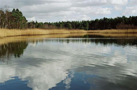 pond wiktionary