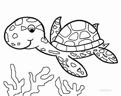 Coloring Pages Turtle Sea Squid Fox