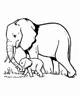 Coloring Elephants Elephant Printable Realistic Animals Children Justcolor Above Credit Challenges Shutterstock sketch template