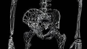 Rotation Of 3d Skeleton Hip Bone Pelvis Pelvic Anatomy