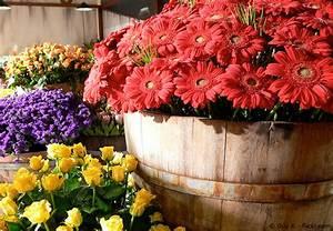 Blumenkästen Mit Bewässerung : blumenk sten bepflanzen ideen f r einsteiger garten ~ Lizthompson.info Haus und Dekorationen