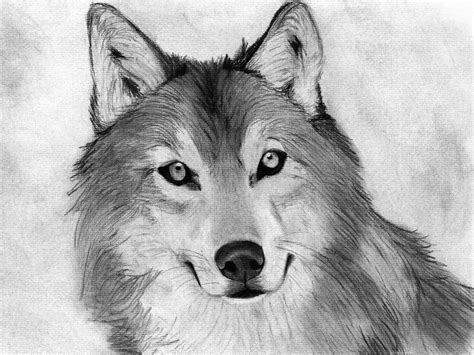 drawing animals  beginners google search animals