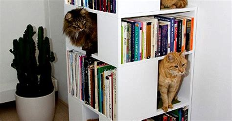 The Catcase Is A Mixture Of A Bookcase And Cat Tree That