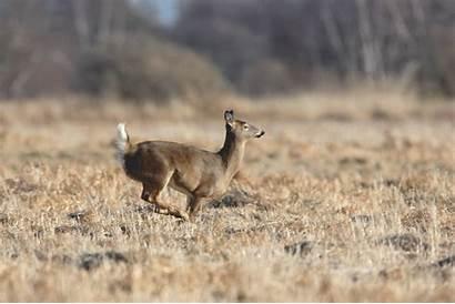 Deer Running Animated Gifs Jump Jumping Animation