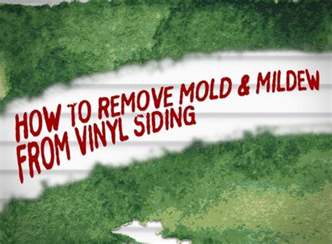 How To Remove Mold And Mildew Stains From Vinyl Siding 7