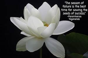 Yogananda quote... White Water Lily Quotes