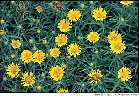 all season flower plants almanac of perennial blooming times sfgate