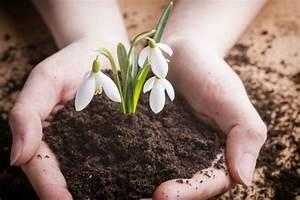 Schneeglöckchen Im Topf : schneegl ckchen pflanzen pflegen schneiden und mehr ~ Markanthonyermac.com Haus und Dekorationen