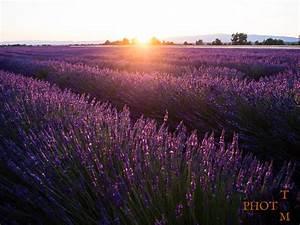 Lavendel Wann Schneiden : wann lavendel pflanzen lavendel wann pflanzen wie pflegen liebenswert lavendel pflanzen tipps ~ One.caynefoto.club Haus und Dekorationen