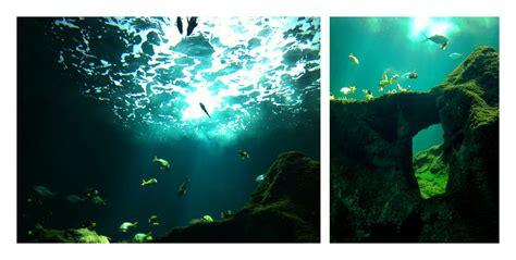 aquarium 233 quip 233 longueur 28 images wonderful meuble aquarium 80 cm 7 aquarium