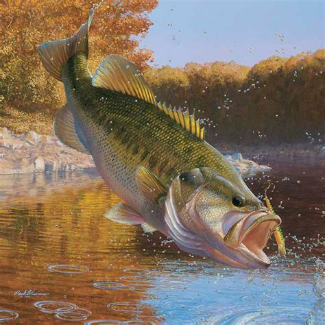 Images Of Bass Fish Bass Fishing Graphics And Comments
