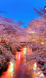 720x1280 Wallpaper o-hanami, blossom, sakura, japan ...
