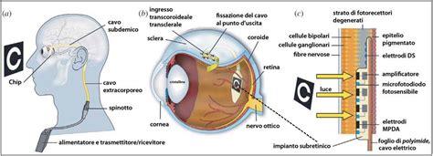 schema funzionamento occhio fare di una mosca