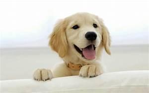 Cutest golden retriever puppy ever!! | Dogs | Pinterest
